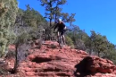 Danny Pate, Kelly Emmett Shred (Sedona, AZ)